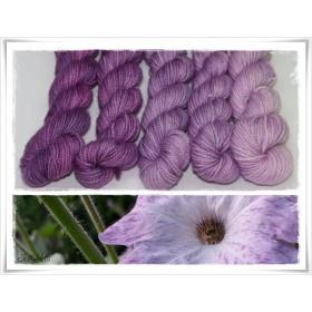Gradient Yarn hand dyed PETUNIA
